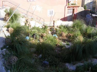 El estado de dejadez de algunos de las zonas verdes de San Roque está muy avanzado.