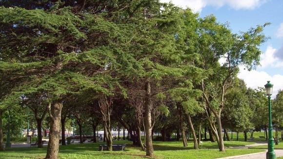 """""""Si molestaban ¿para qué pusieron tantos árboles? ¿No sabes que crecen?"""", comentó una vecina indignada."""