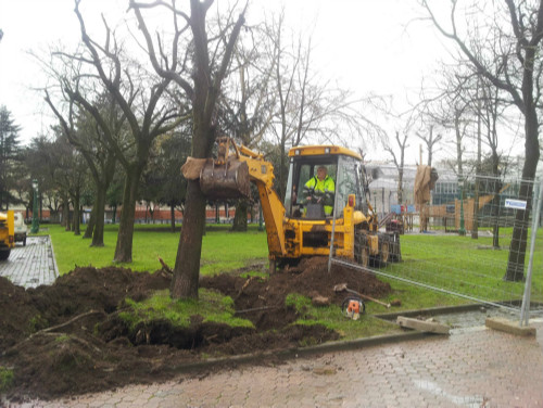 Se han trasladado hasta el momento dos árboles.