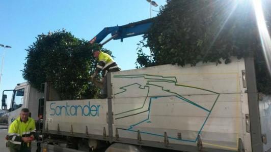 Los operarios les han dicho a los vecinos que tienen órdenes de trasladar los árboles al Parque María Cristina.