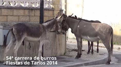 ACPT rechaza la celebración de la carrera de burros de Tanos. Foto: ACPT