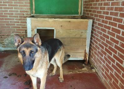 Perro abandonado en la perrera de Cecapa (Maliaño).