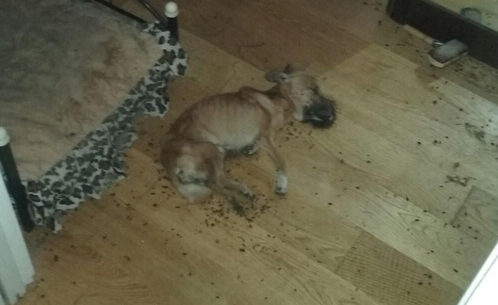 El estado en el que se encontró al perro en el interior de la casa.