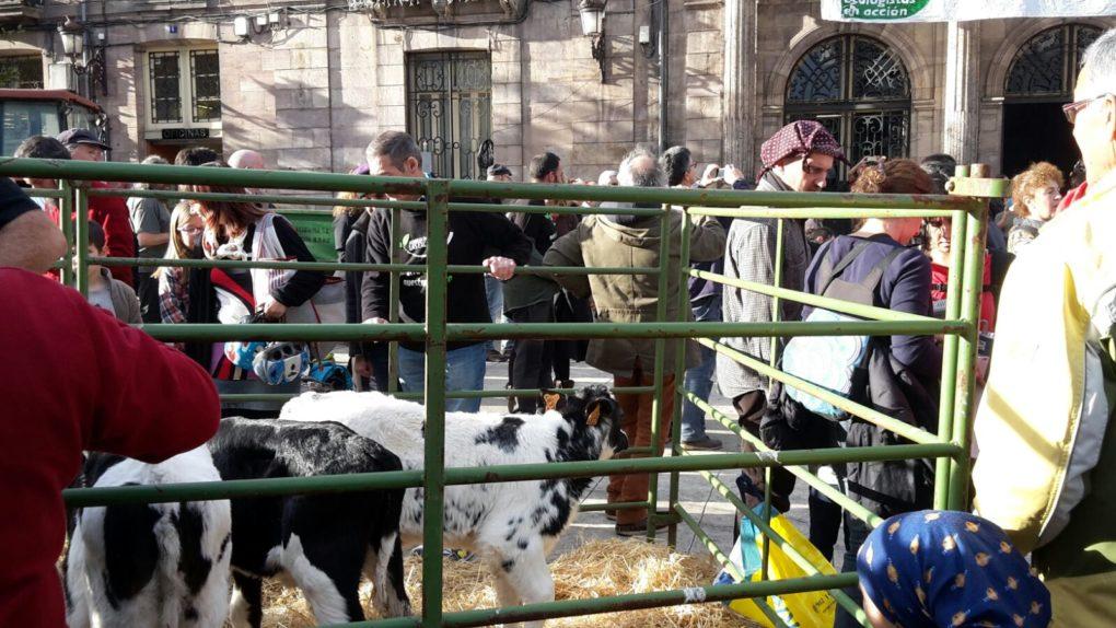 Animales frente al Ayuntamiento de Torrelavega