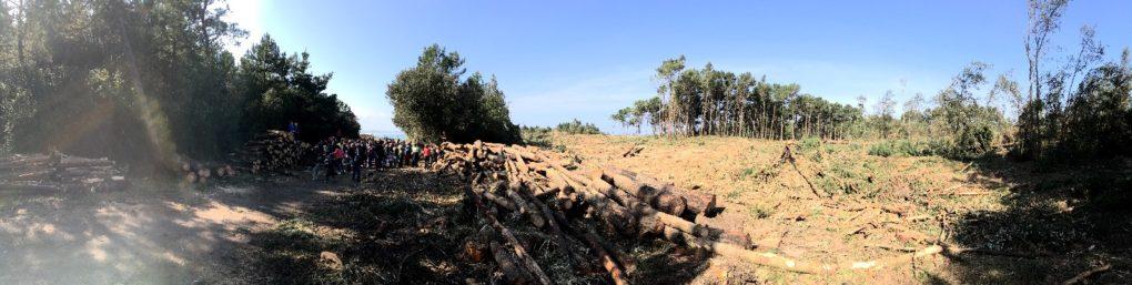 movilizacion-bosque-loredo